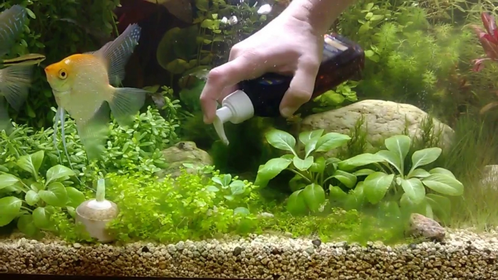 бурые водоросли в аквариуме как бороться