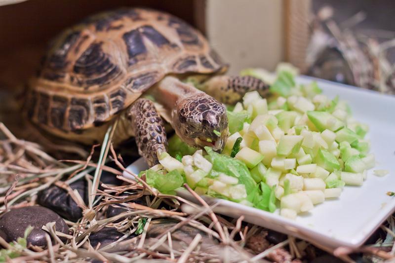едят речные черепахи в домашних условиях