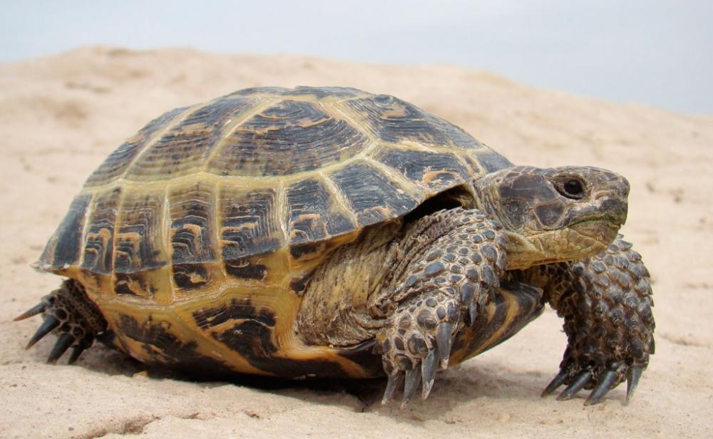 едят сухопутные черепахи в домашних условиях