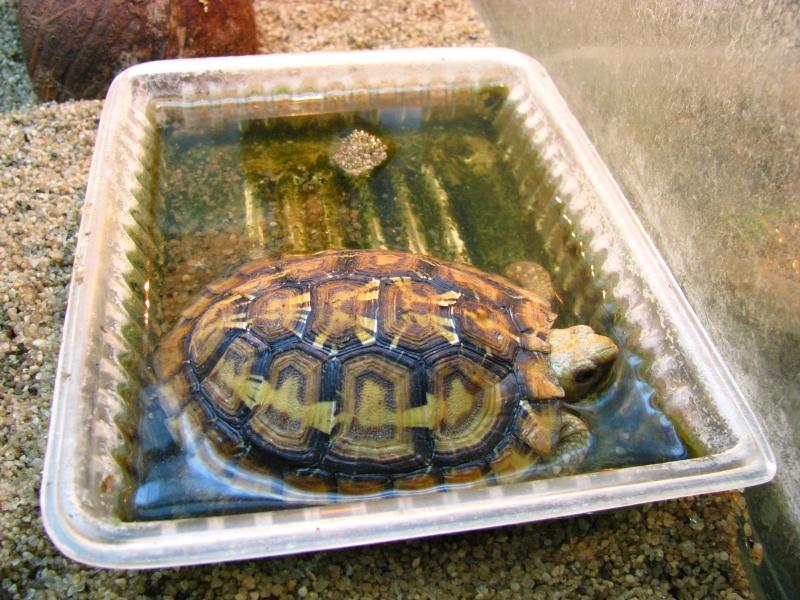 кушает черепаха