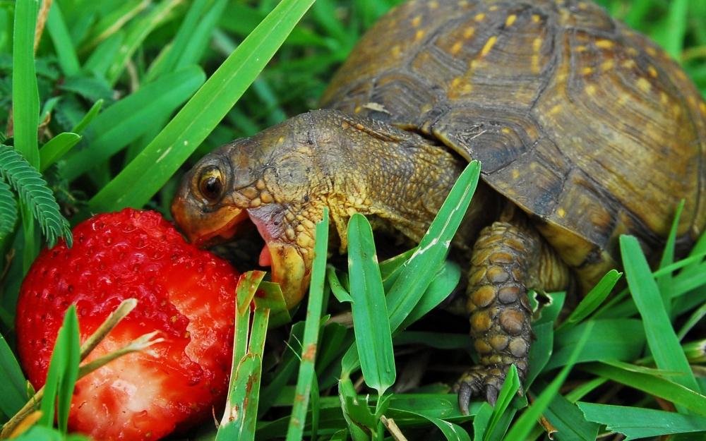 кормить черепаху в аквариуме