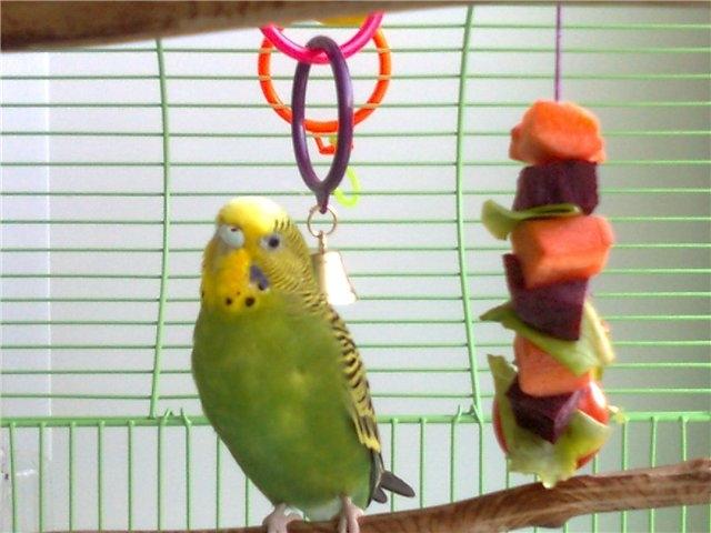 питается попугай в естественной среде