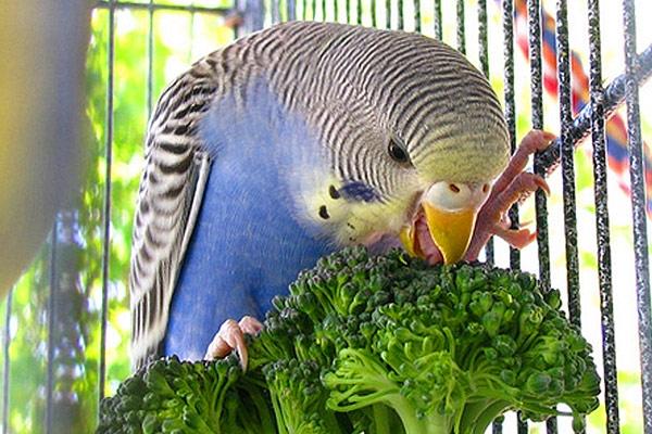 поилка для попугая