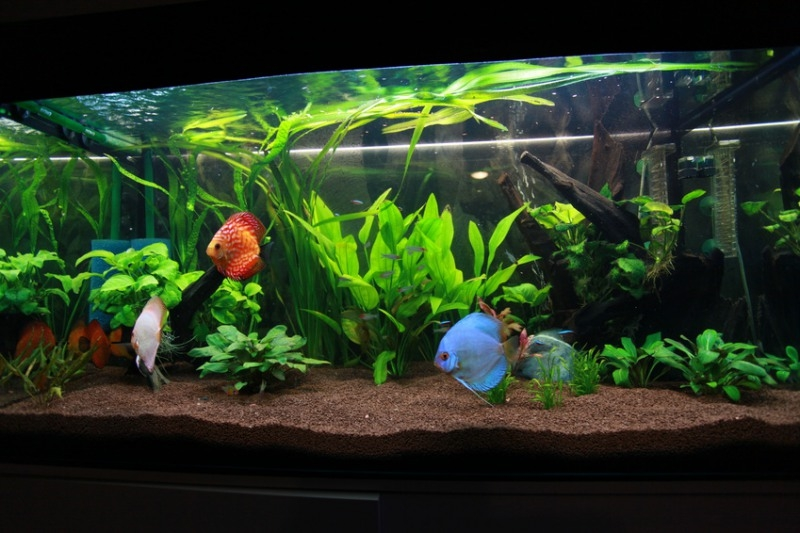какой аквариум лучше выбрать для начинающих