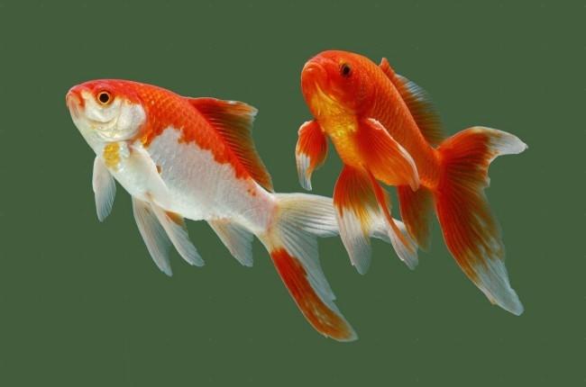 начать разводить рыбок