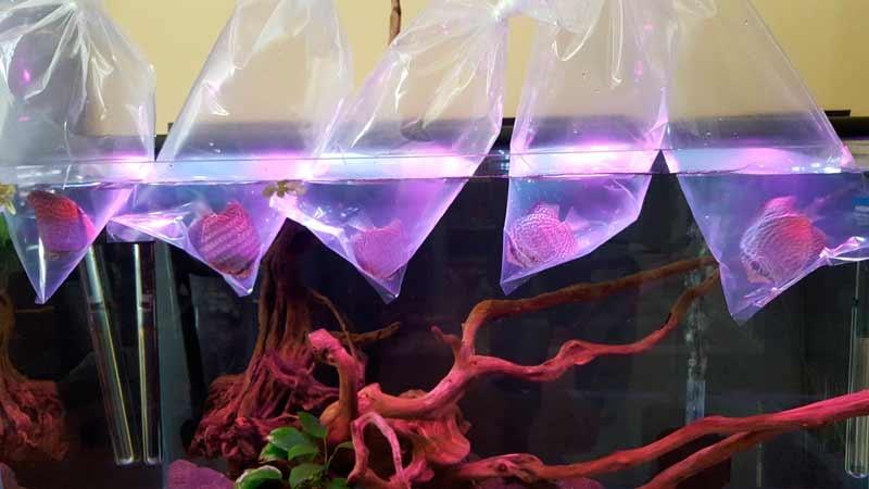 оборудование для аквариума что нужно