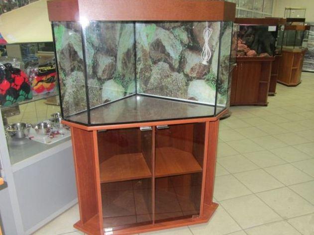 разведение аквариумных рыбок в домашних условиях