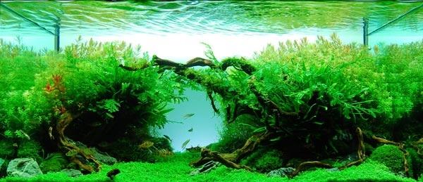 как содержать аквариум в домашних условиях инструкция