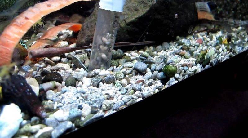 устройство аквариума для рыб