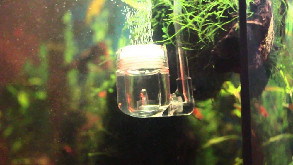 брага для аквариума