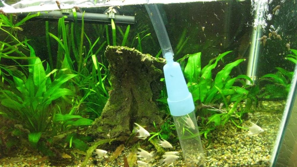 Как чистить дно аквариума? Чистка аквариума! Сифоним грунт в ...