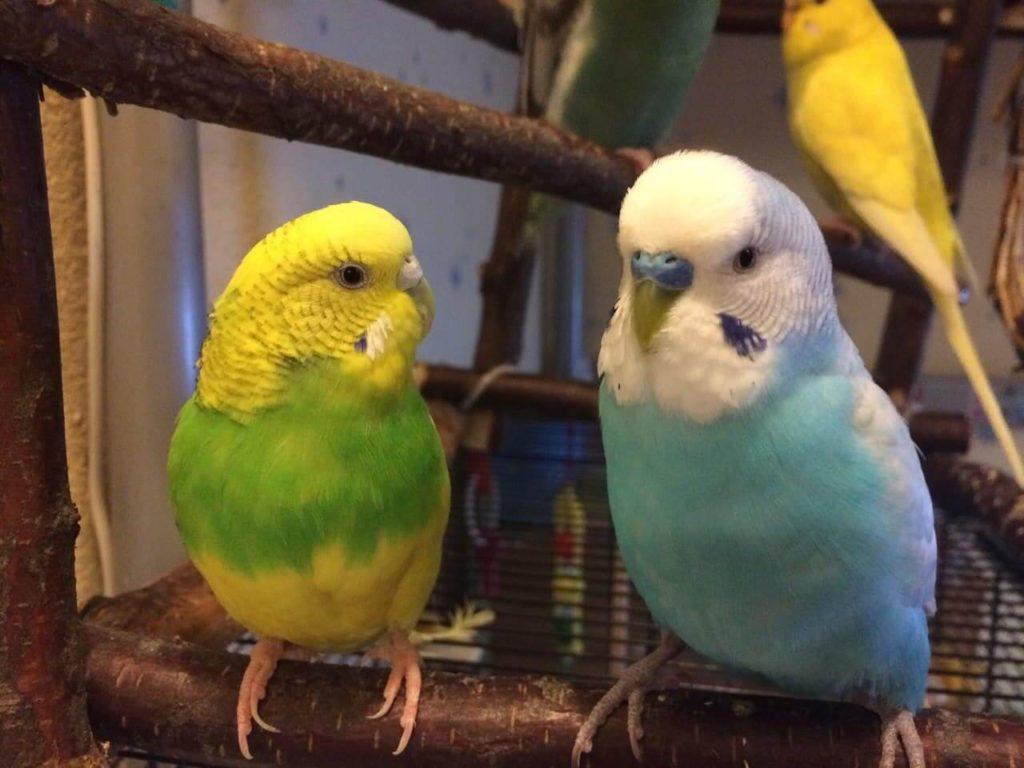 как выглядит попугай
