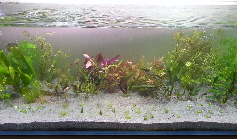 Почему аквариум нельзя заполнять кипяченой водой - Все о воде