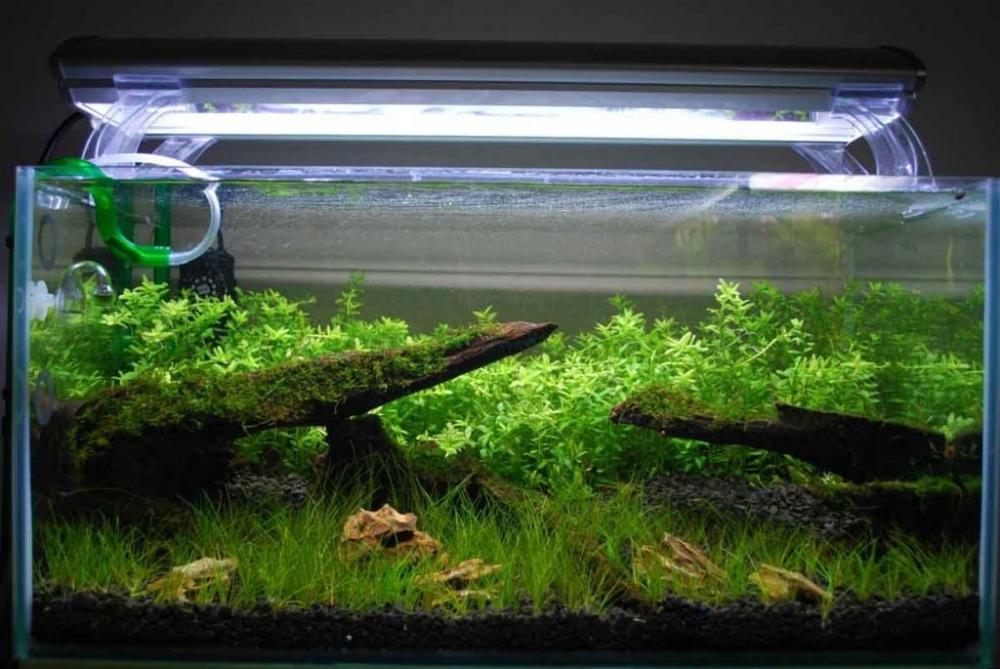 Освещение аквариума - 75 фото примеров по дизайну