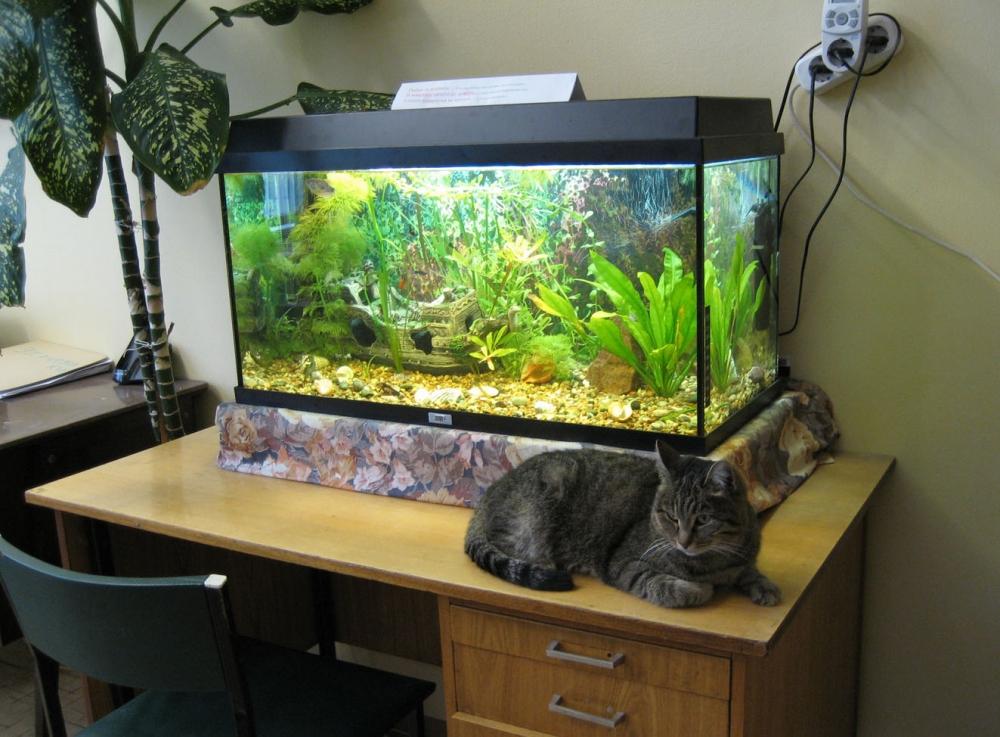 Ремонт аквариумной крышки: что почем? – Blue Barbus