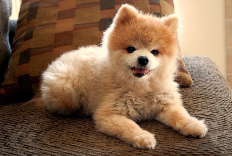 мини породы собак