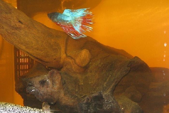Мутная вода в аквариуме, муть в аквариуме - Страница 57