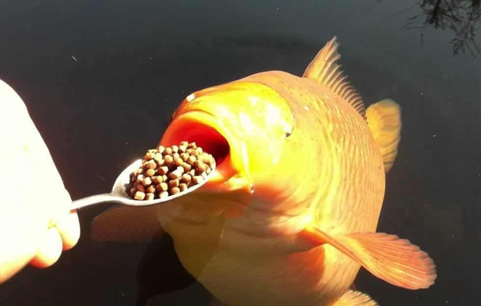 и НИИБ_Т: Чем кормить рыбок или наживка для рып.