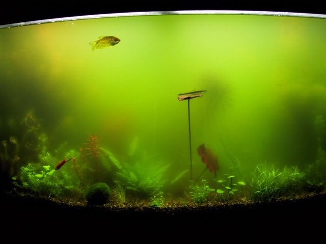 Вода в аквариуме стала мутной что делать