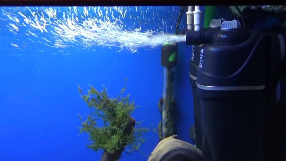 мутная вода в аквариуме после запуска