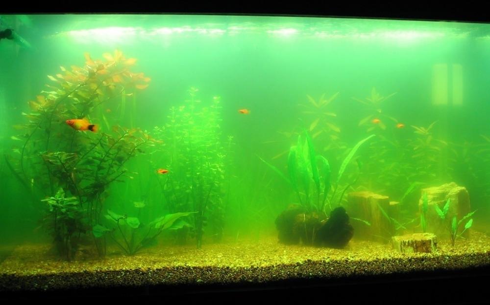 вода в аквариуме помутнела на второй день