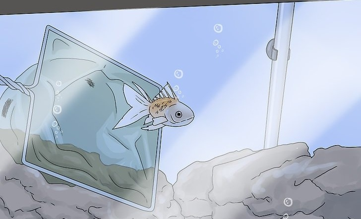 Как понять, что ваша рыбка умерла