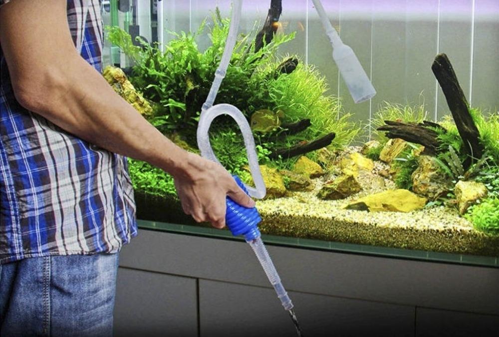 избавиться от зелени в аквариуме