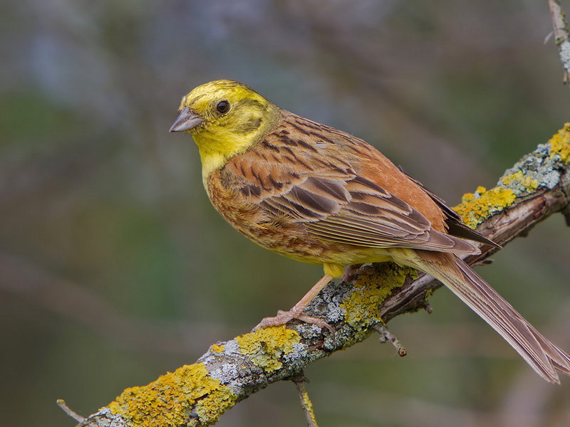 содержание певчих птиц в домашних условиях