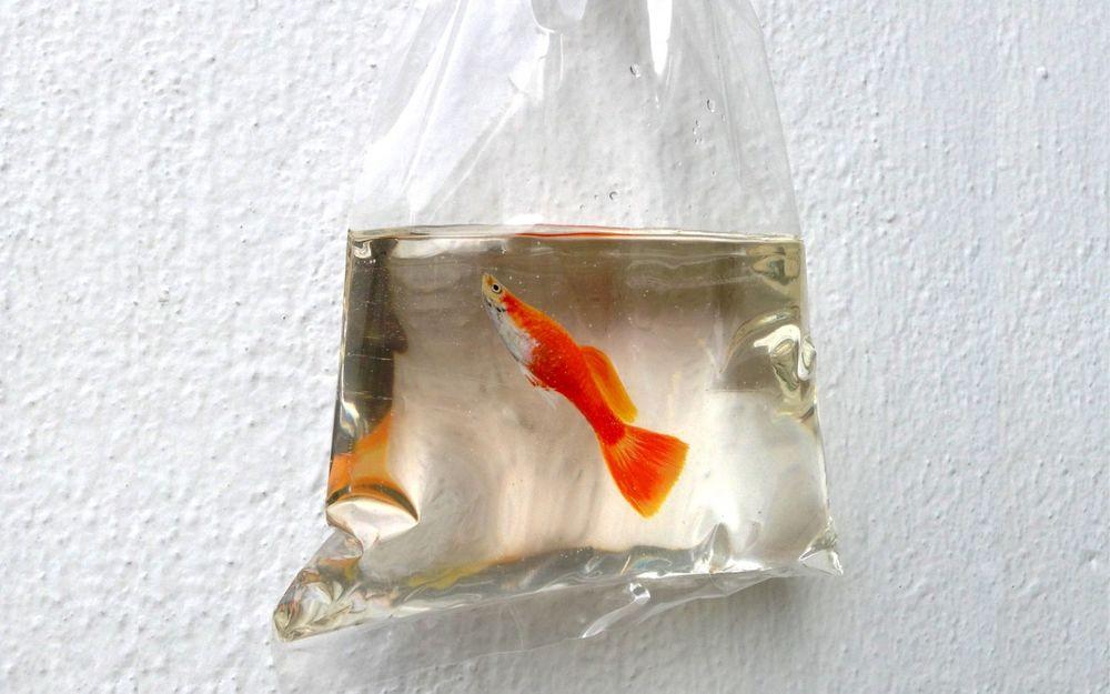 дохнут рыбы в аквариуме причины