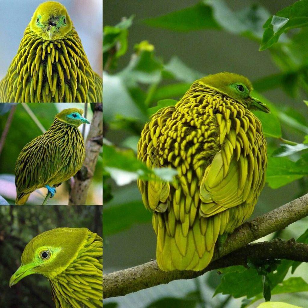 Декоративные птицы картинки с названиями