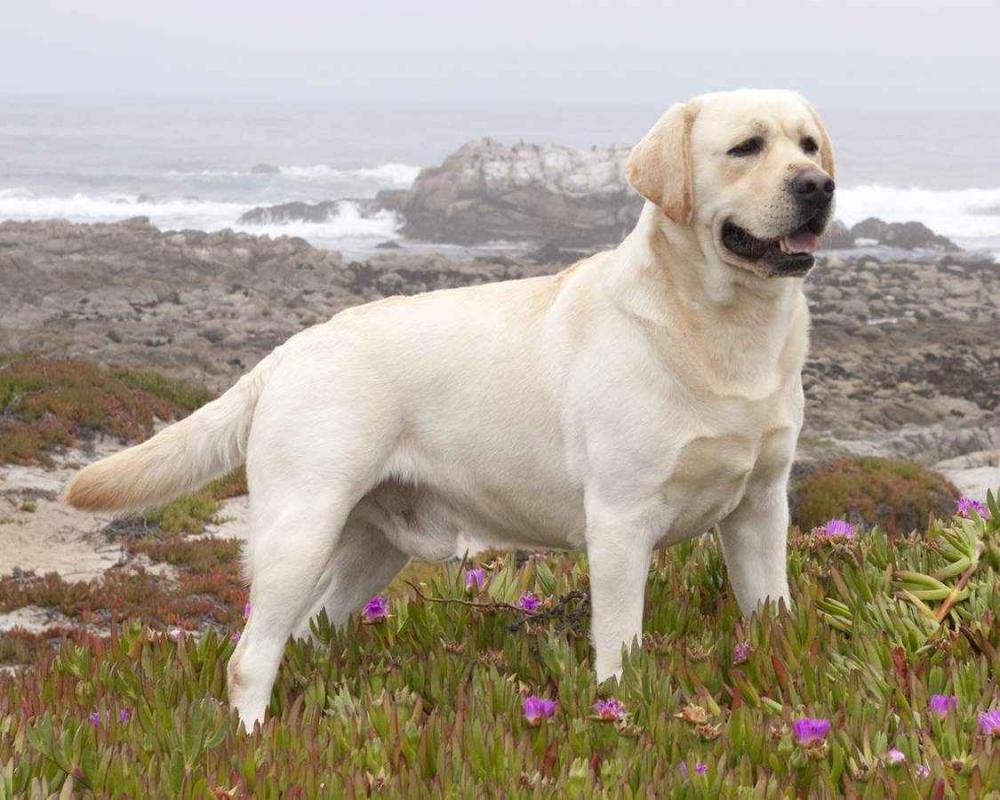 собака для квартиры без запаха