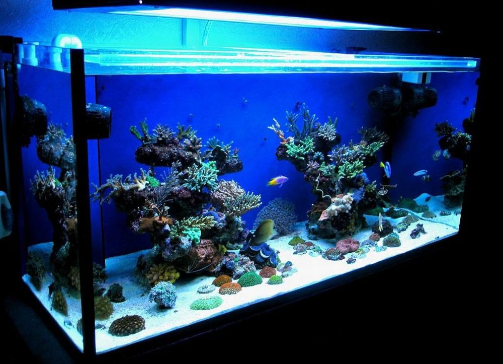 расчет литража аквариума