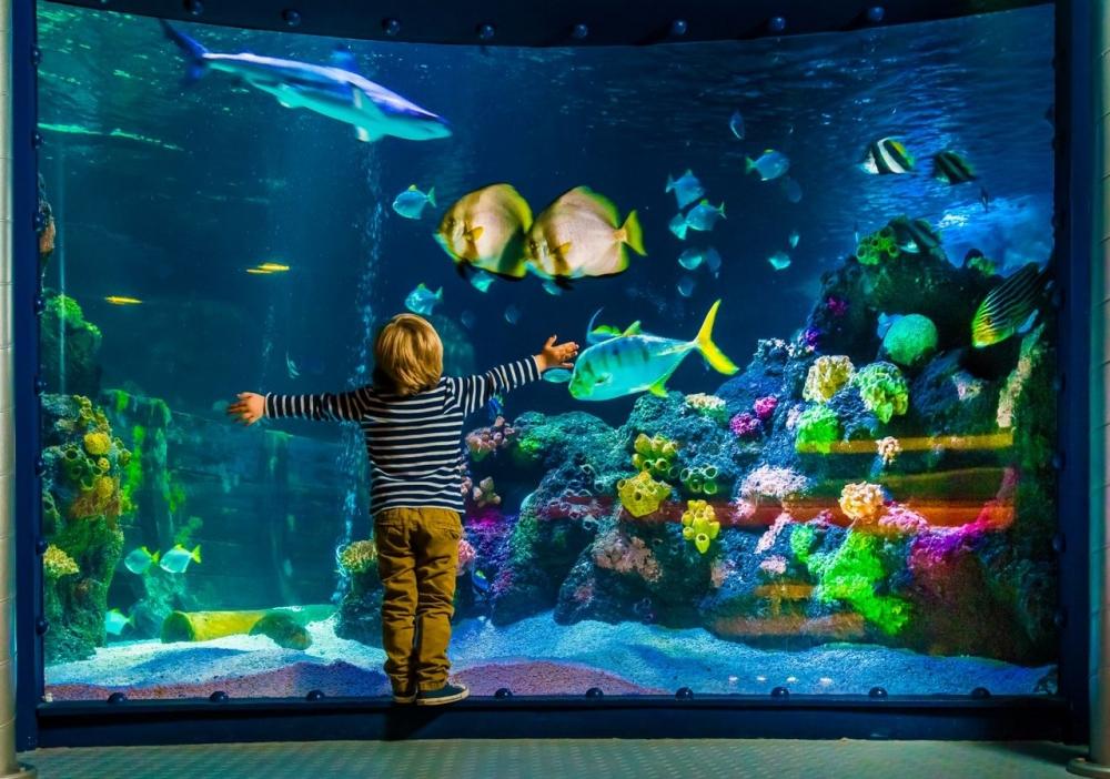 рассчитать литраж аквариума