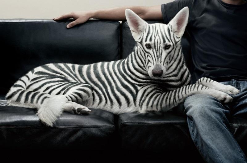необычные породы собак с фотографиями и названиями