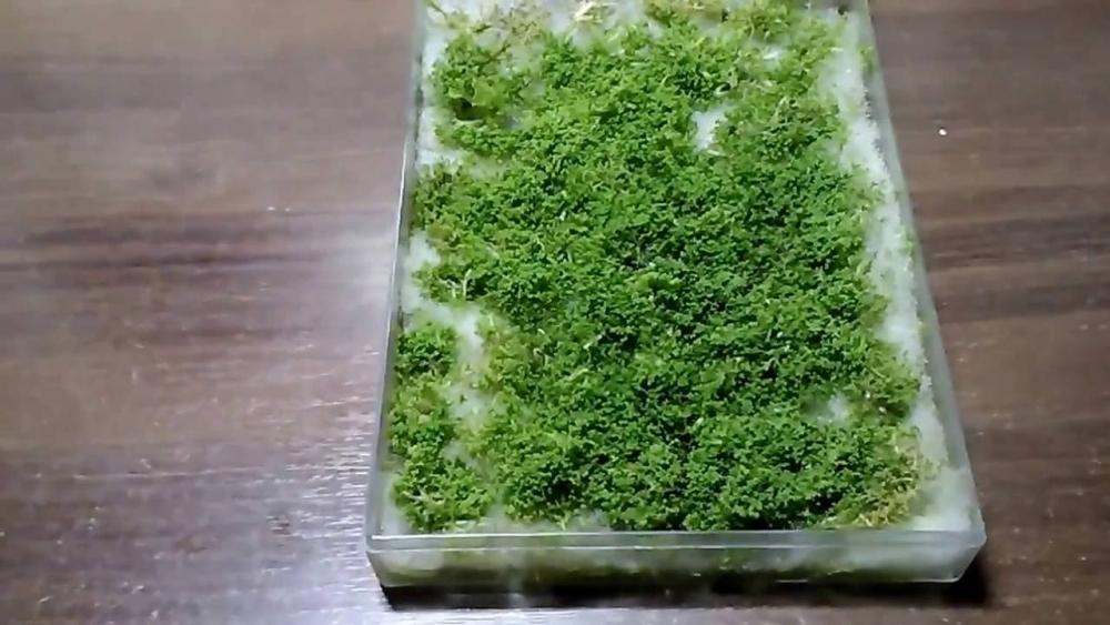 риччия аквариумное растение