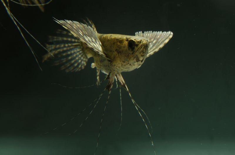 рыба бабочка фото