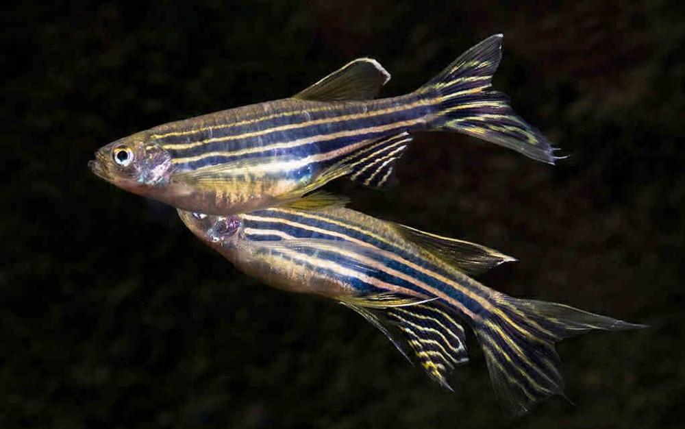 сколько лет живут рыбы