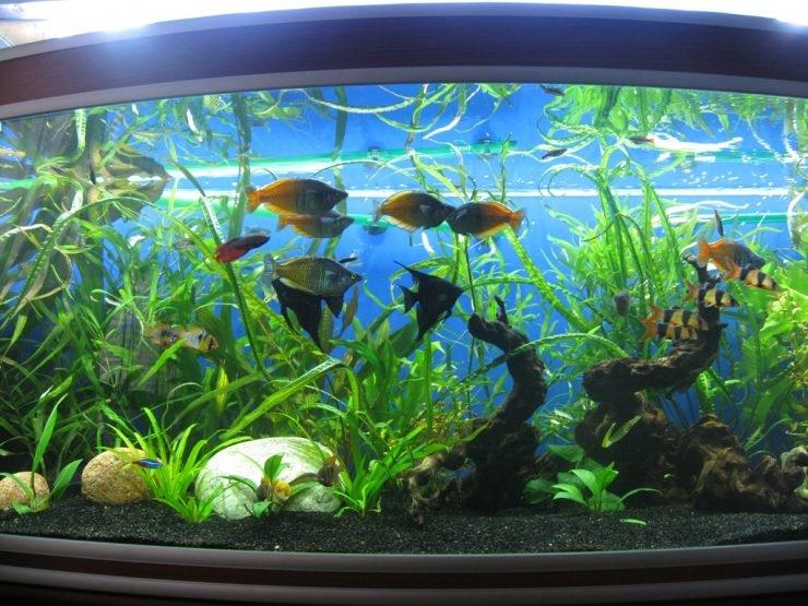 какое освещение должно быть в аквариуме