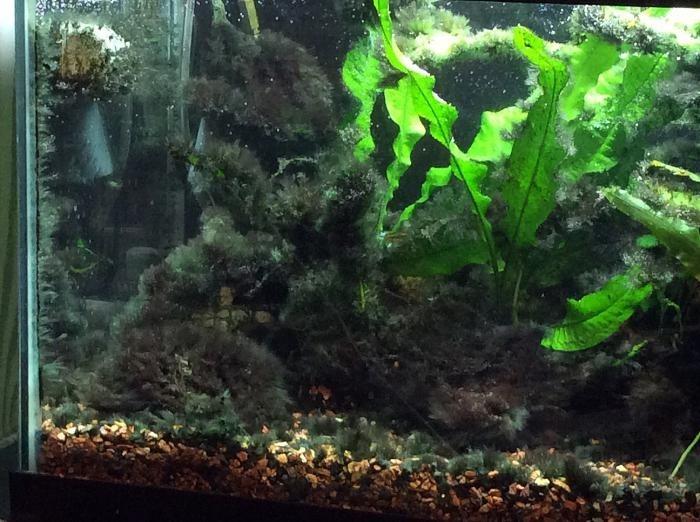 какой свет лучше для аквариума