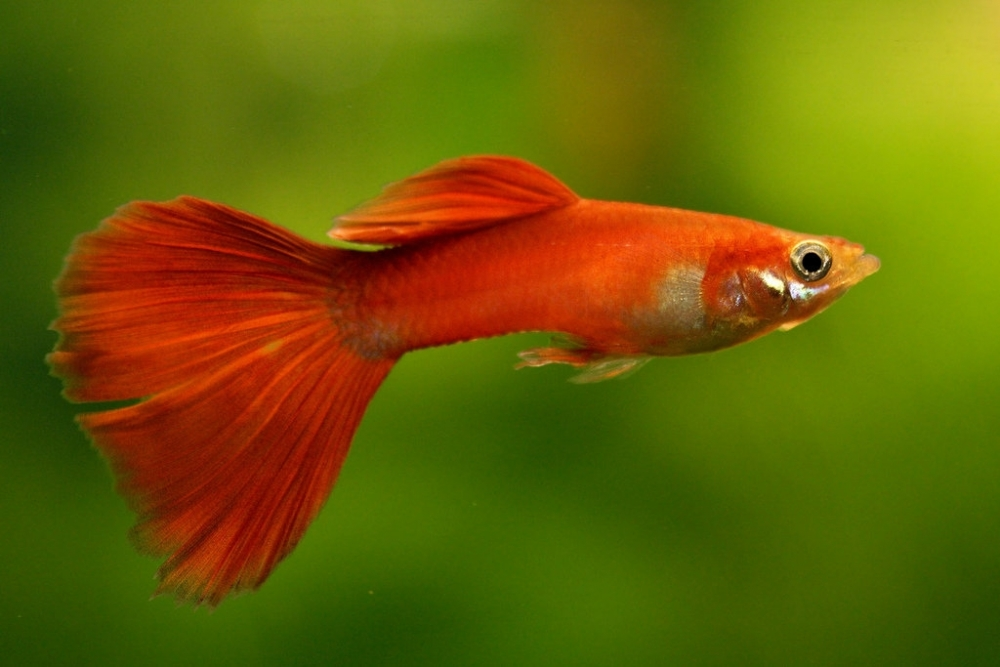 какая температура должна быть в аквариуме