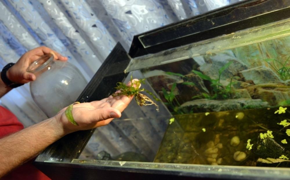 Перезапуск аквариума: как правильно?