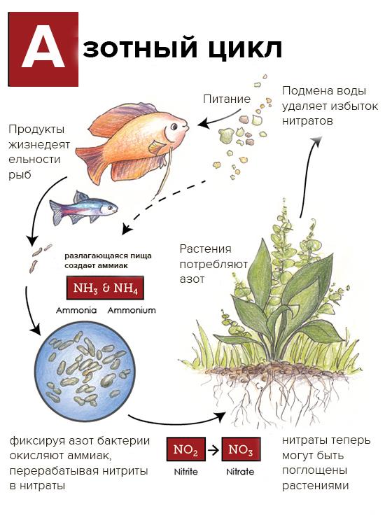 какие водоросли лучше для аквариума