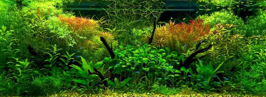 Напутствие Начинающим в выращивании растений в аквариуме: purga_tao