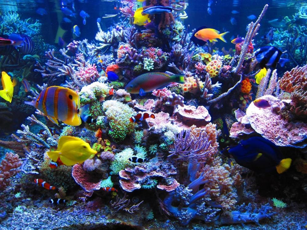 Морской аквариум у вас дома