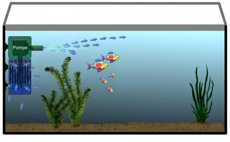 Фильтрация воды в аквариуме | Каталог статей