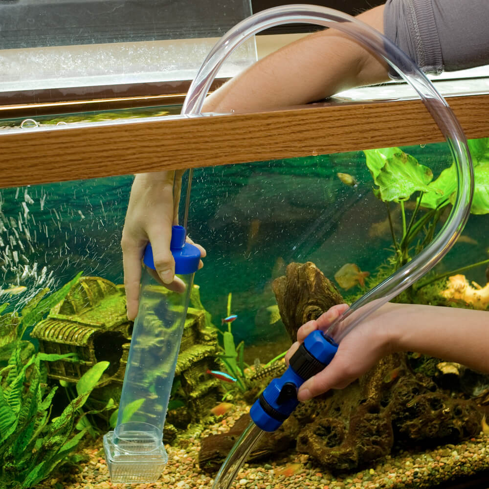 Подмена воды в аквариуме: как, сколько и как часто менять воду в ...