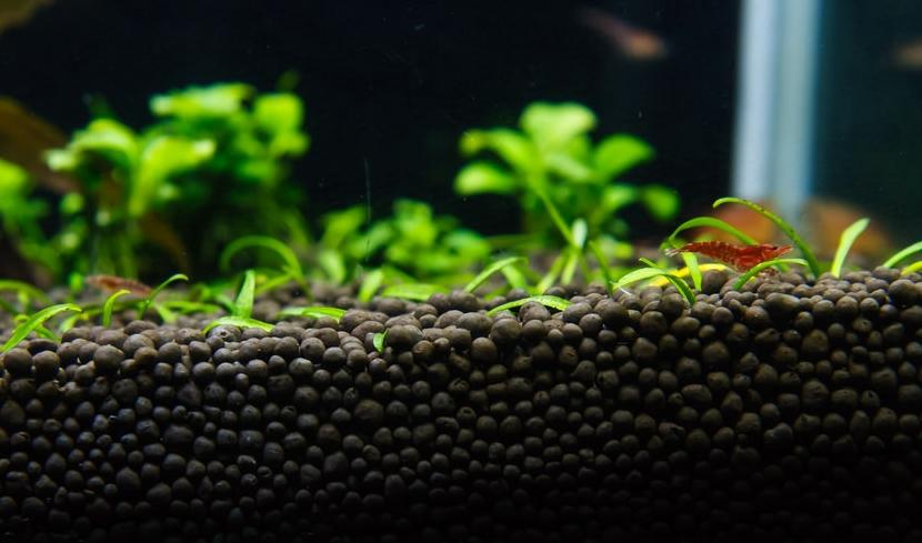 подготовить аквариум к заселению рыбками