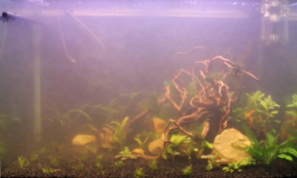 Мутная вода в аквариуме после запуска: причины, что делать (видео)