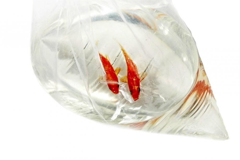Интерьерная композиция «Рыбки в пакете»