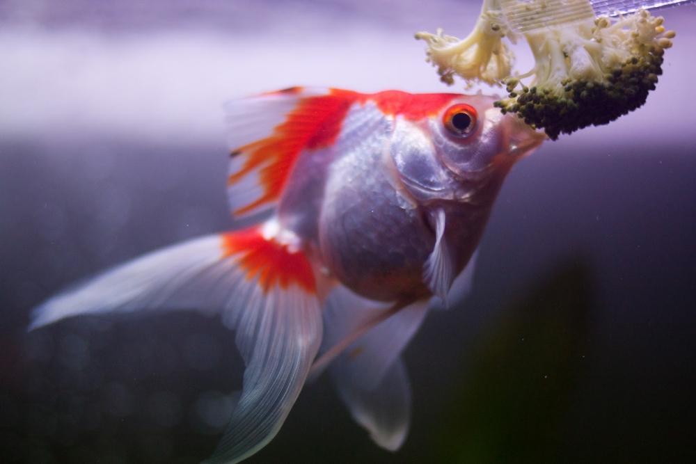 Корм для аквариумных рыбок своими руками: рецепты, видео